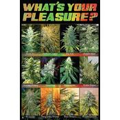 Cannabis Sorts Poster What's Your Pleasure