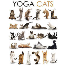 Cats Poster Yoga