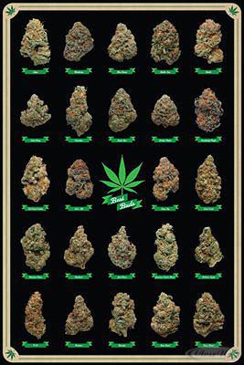 Cannabis Poster Best Buds Marihuana-Sorten
