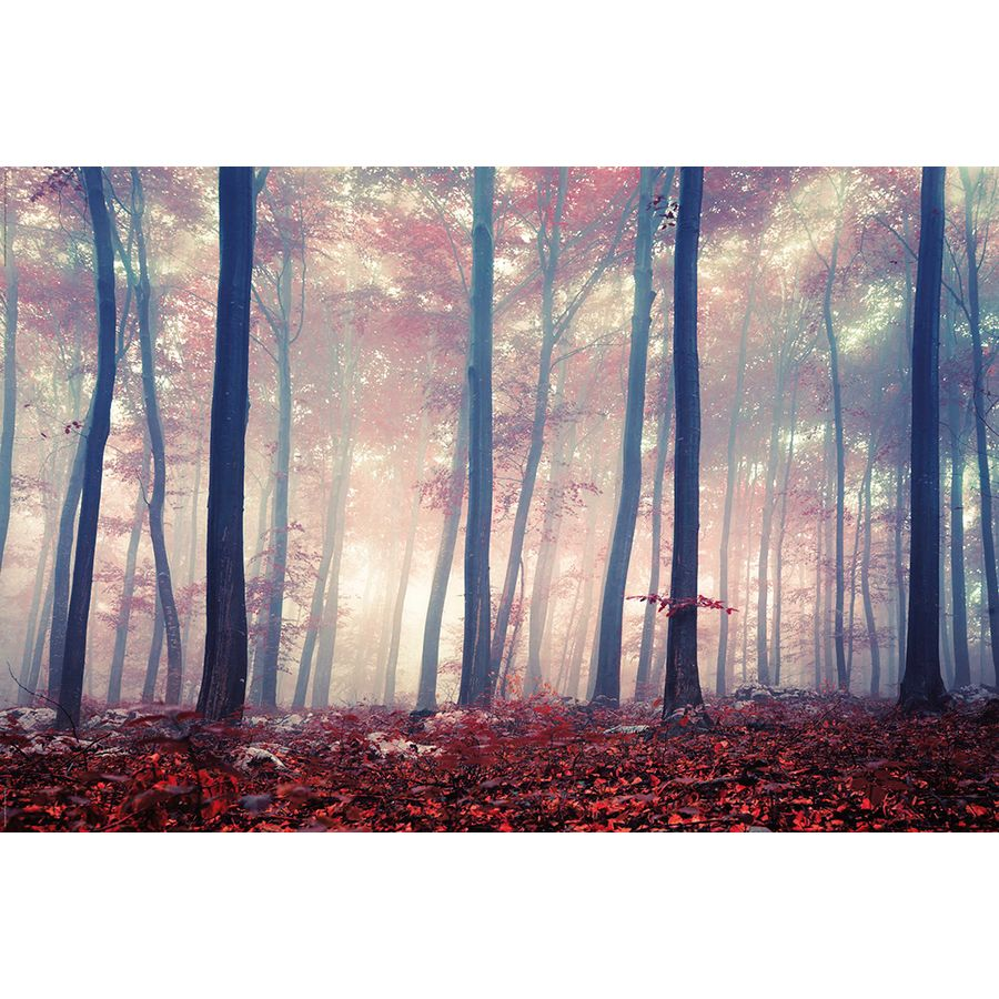 colored forest poster bei close up online kaufen. Black Bedroom Furniture Sets. Home Design Ideas