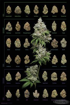 Cannabis Poster Dank Nugs Marihuana-Sorten