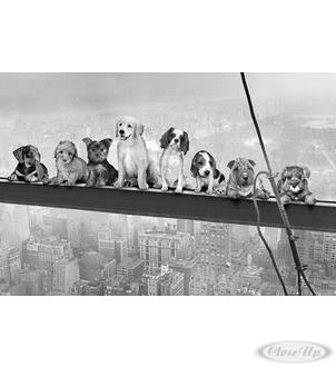 Dogs above Manhattan Poster
