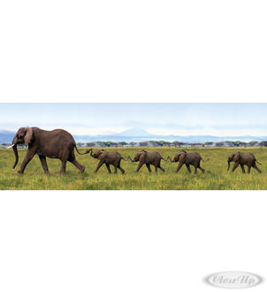 ELEPHANTS IN SINGLE FILE