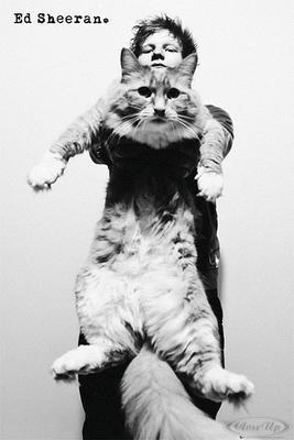 Ed Sheeran Poster Katze