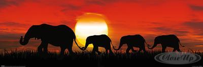 Elefanten Poster Sunset Sonnenuntergang