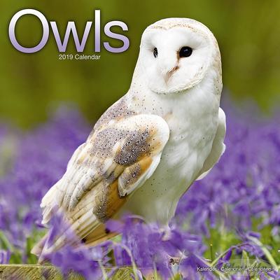 Eulen Kalender Owls 2019