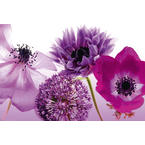 Flowers Poster Purple Summer