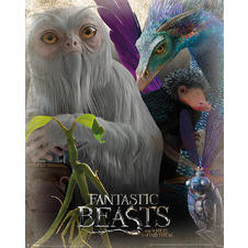 Fantastic Beasts and Where to Find Them Poster -