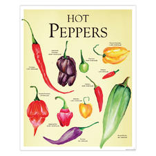 Hot Peppers Poster Janette