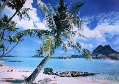Insel Bora Bora Poster Strand