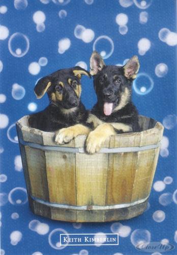 keith kimberlin 2 hunde in einer holzwanne postkarten jetzt im shop bestellen close up gmbh. Black Bedroom Furniture Sets. Home Design Ideas