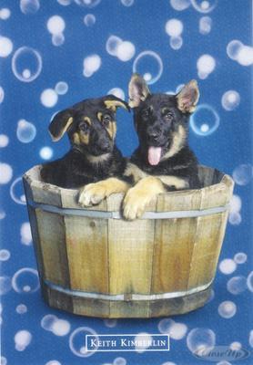 Keith Kimberlin 2 Hunde in einer Holzwanne