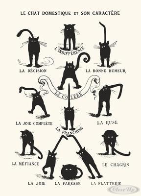 Le Chat domestique et son Caractère