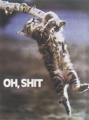 Oh Shit! Katzen Poster