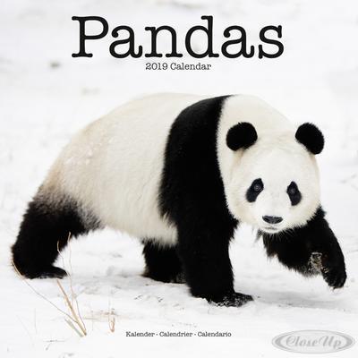 Panda Kalender 2019