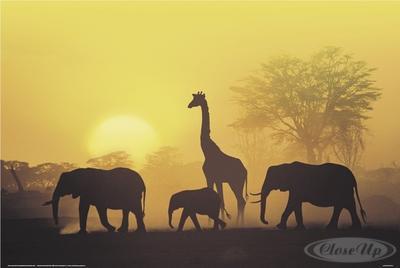 Sonnenuntergang in Kenia Poster