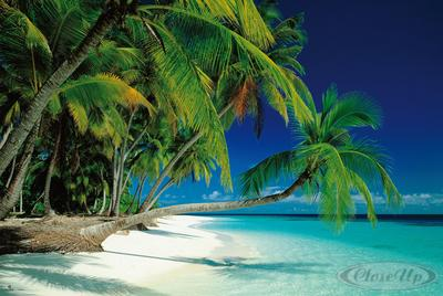 Traumstrand Poster ´´Tropical Paradise´´ Malediven