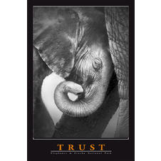 Trust Poster Elephants at