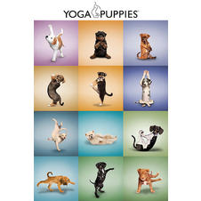 Yoga Puppies Poster Welpen