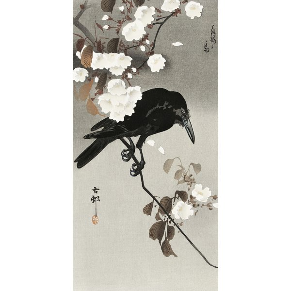 Crow And Cherry Blossom