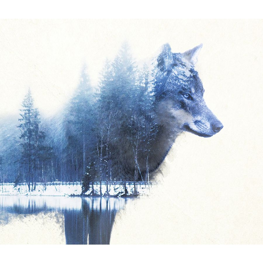 forest wolf poster madeleine poster gro format jetzt im shop bestellen close up gmbh. Black Bedroom Furniture Sets. Home Design Ideas