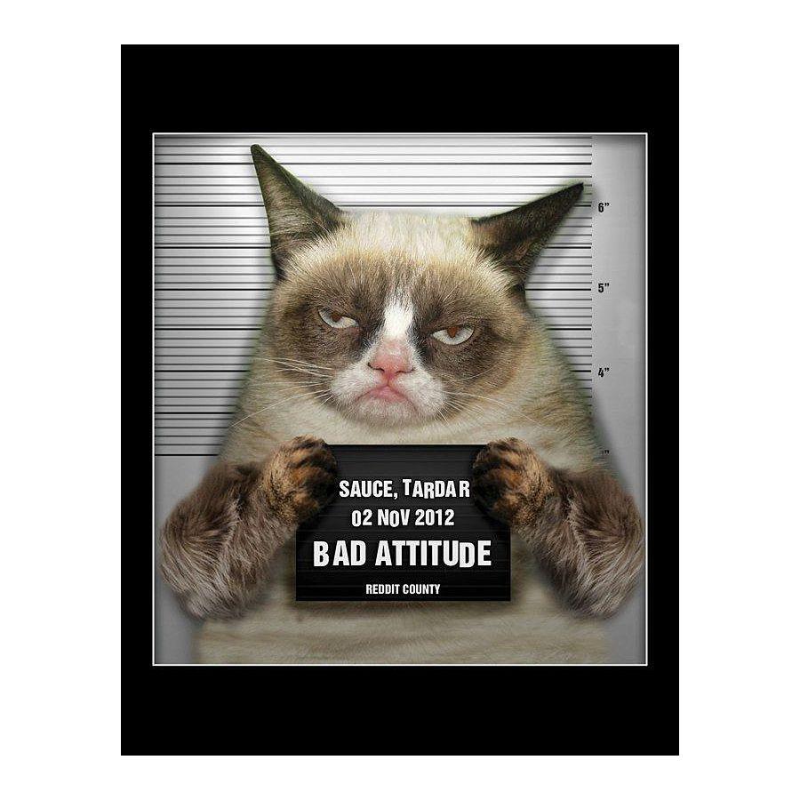 grumpy cat miniposter sauce tardar poster kleinformat jetzt im shop bestellen close up gmbh. Black Bedroom Furniture Sets. Home Design Ideas